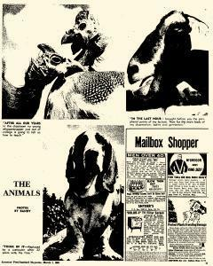 Syracuse Post Standard, March 07, 1965, Page 196