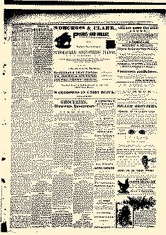 Abilene Daily Reporter, February 20, 1891, Page 3